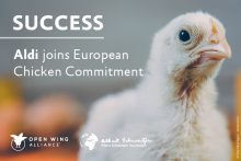 Success: Aldi Joins Chicken Commitment