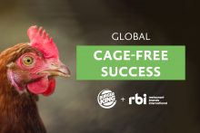 Burger King says No to cage eggs worldwide