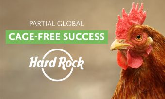 Partial Success: Hard Rock Without Cage Eggs