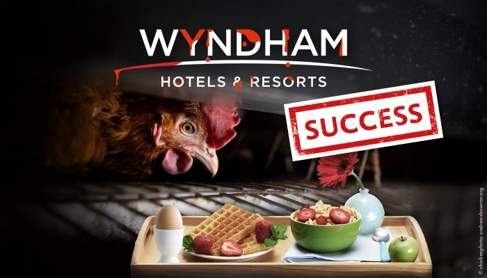Success Wyndham Petition