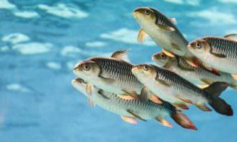 Animal Welfare Standards in Aquacultures