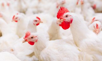 Globus joins Chicken Commitment