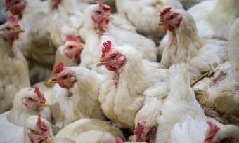 Aramark joins European Chicken Commitment
