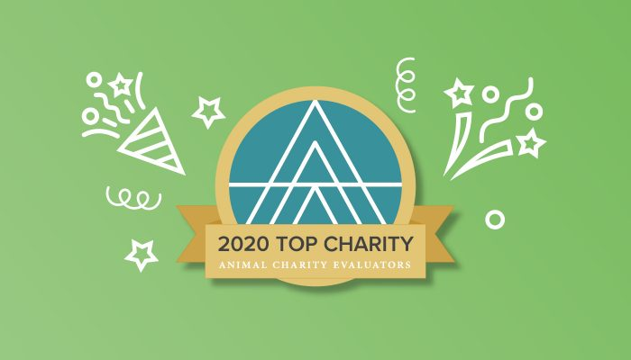 Top Charity 2020