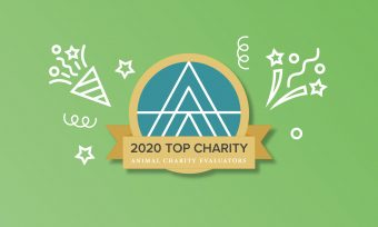 We are a 2020 Top Charity