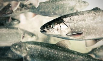 Welfare standards in the aquaculture industry