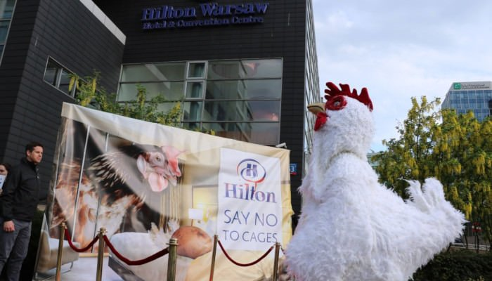 Campaign Hilton goes Cage-Free
