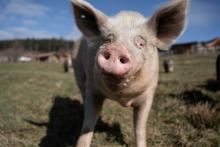 EU Commission Announces Cage Ban